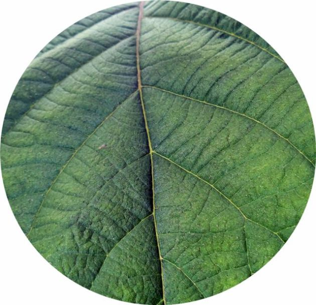 close up picture of a leaf
