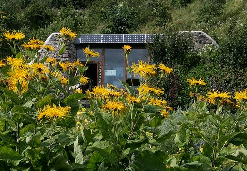 Earthship Flowers picture